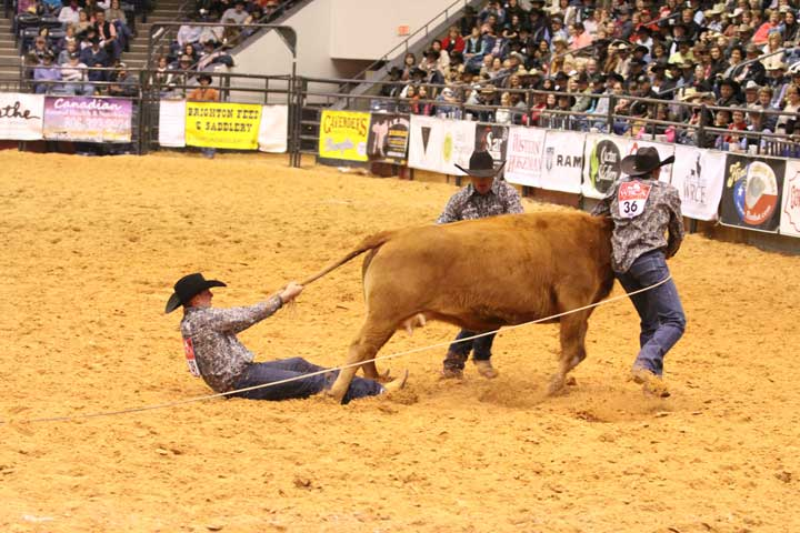 "They call it ""cowboy water skiing,"" and Cody Heck of the Crutch Ranch in Borger, Texas, got a taste of it Saturday night, as his team struggled to stop their cow in the wild cow milking event. The team's time was :49.96."