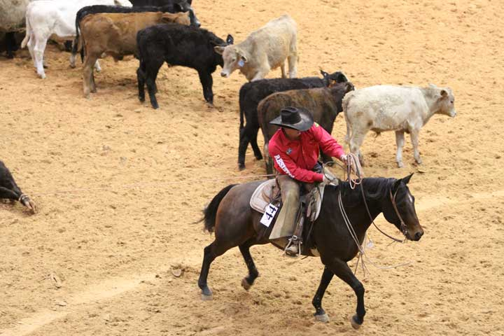 Rodey Wilson of the Wilson Cattle and T4 Cattle team from Hereford and Canyon, Texas, rides Tivio Enterprise in calf branding, working for a time of :45.50.