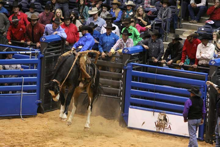 Alan Rabel of Swenson Land & Cattle in Stamford, Texas, opted for a reride Saturday night. Here, his bronc goes out of the chutes -- and then up. His second-ride score was a 71.