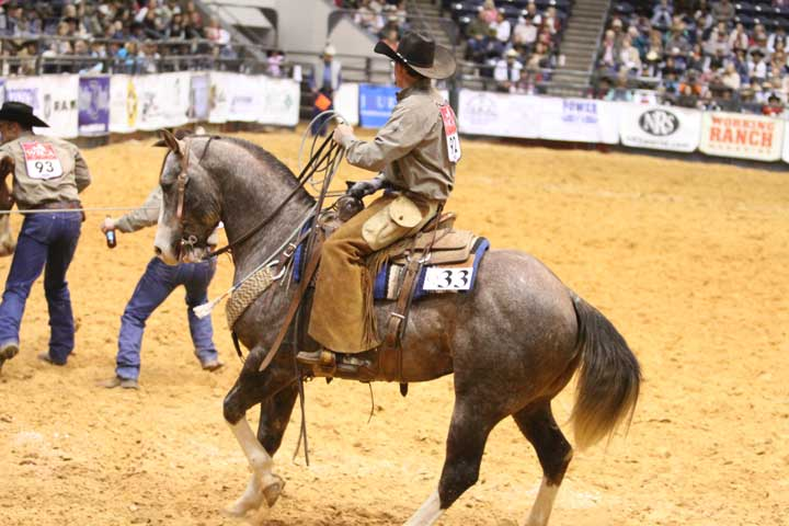 Tripp Townsend uses Sage Tradition to handle the wild cow in the milking event for Sandhill Cattle Co. of Earth, Texas. Sandhill ended up being named the 2013 world champs, and Sage Tradition was named the reserve top horse.