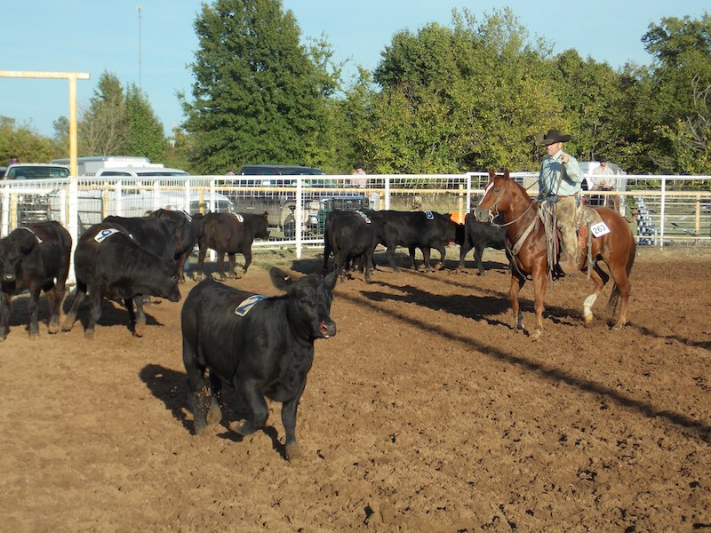Top Horse Sorting - 2014 Pryor Creek - WRCA