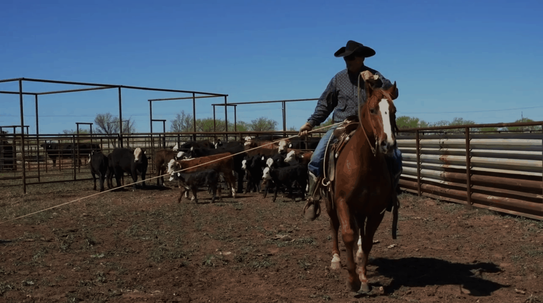 2015 Old Settler S Reunion Ranch Rodeo Results