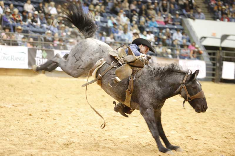 No, the whistle hadn't blown yet ... but Chaz Brewer of the Barron-Highsmith Cattle & Short Ranch team stayed on for the full 8 seconds. He received a score of 74. Broncs this year are being provided again by the esteemed Harry Vold Rodeo Co.