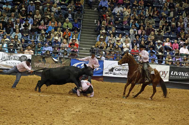 "There is a reason they call it ""wild"" cow milking! Colton Miller took a hit for the Silver Spur-Headquarter Division team, while Sable Fever (by Playboys Buck Fever) and his two-legged teammates try to get things under control. They ended with a time of 54.61 seconds."